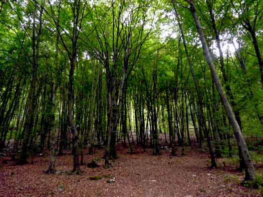 Lucaria, the Roman Festival of the Grove