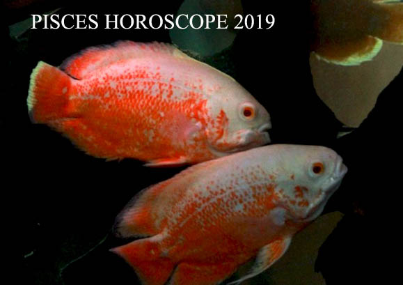 2019 Pisces Horoscope: Money, Career and Business