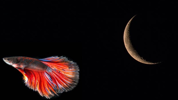 March 2021 New Moon in Pisces: Wings of Imagination